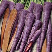 Carrot Purple Haze F1 Seeds