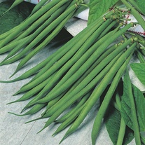 Dwarf Bean Fandango Seeds