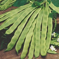 Climbing Bean Pantheon Seeds
