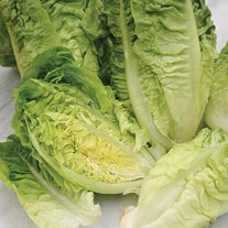 Lettuce Vailan (Winter Gem) Seeds