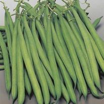 Dwarf Bean Safari Seeds
