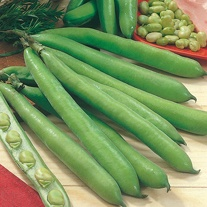 Broad Bean Aguadulce Seeds