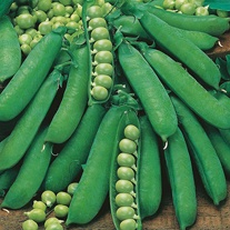 Pea Premium Seeds