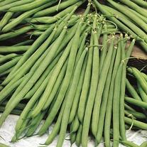 Dwarf Bean Stanley Seeds