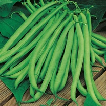 Climbing Bean Blue Lake Seeds