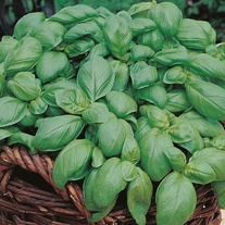 Basil Sweet Seed Mat