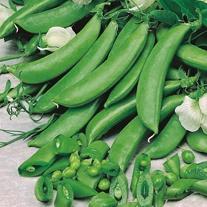 Pea Quartz Seeds