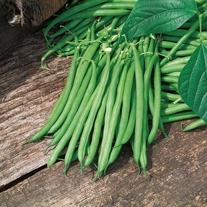 Climbing Bean Matilda Seeds