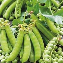 Pea Twinkle Seeds