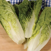 Lettuce Sweetheart Seeds