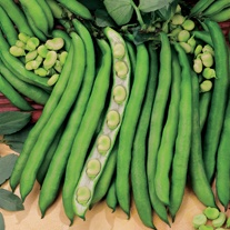 Broad Bean Superaguadulce Seeds