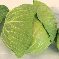 Cabbage Cabice F1 Plants