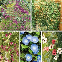 Climbing Plant Collection
