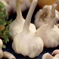 Garlic Solent Wight