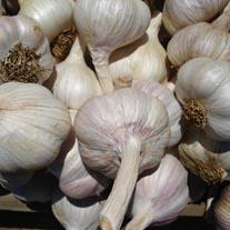 Garlic Carcassonne Wight