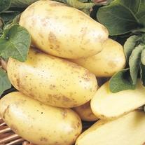 Potato (Second Early) Charlotte