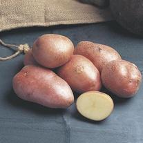 Potato (Maincrop) Desiree