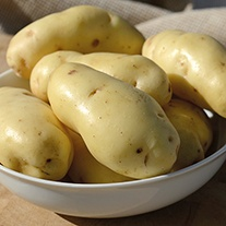 Potato (Early Maincrop) Sarpo Kifli
