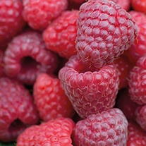 Raspberry Sugana Canes