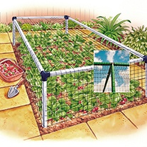 Strawberry Cage - Deluxe 3'x12'