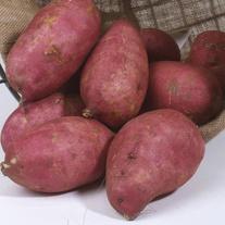 Sweet Potato Murasaki