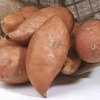 Sweet Potato Beauregard