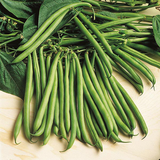 Dwarf Bean Rondo Seeds