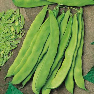 Dwarf Bean Artemis Seeds