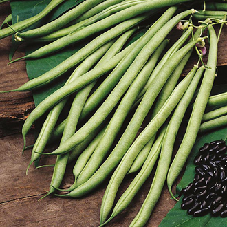 Climbing Bean Cobra (Organic) Seeds
