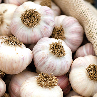 Garlic Bohemian Rose
