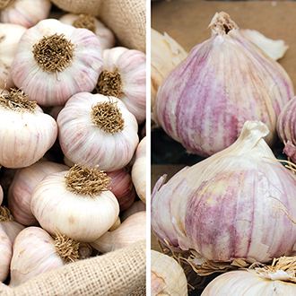 Heritage Garlic Collection