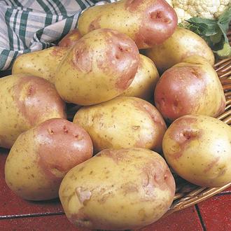 Potato (Maincrop) King Edward