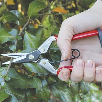 Vine Scissors
