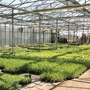 Mr Fothergill's Quality Plant Nursery