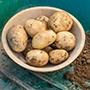 Potato (First Early) Pentland Javelin