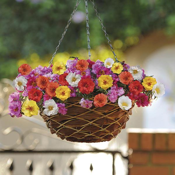 Image Result For Discount Nursery Plantsa