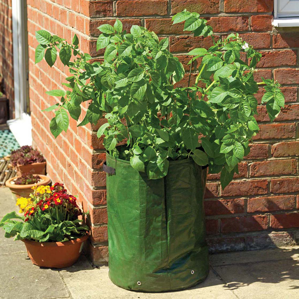 Sweet Potato And Grow Bag Collection From Mr Fothergills Seeds And