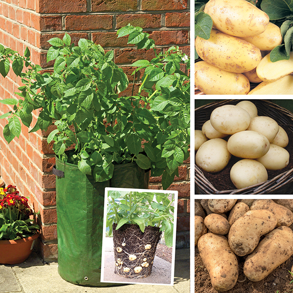 Potato Patio Kit   Spring Planting