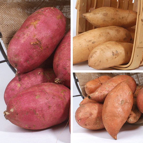 Sweet Potato Collection From Mr Fothergill's Seeds And Plants