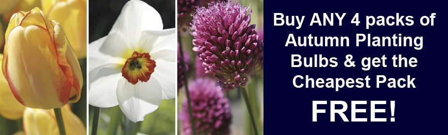 Buy ANY 4 packs of Autumn Planting Bulbs & get the Cheapest FREE!