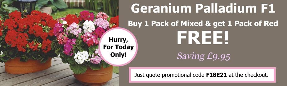Black Friday Event Offer - Buy 1 Get 1 Free on Geranium Palladium F1