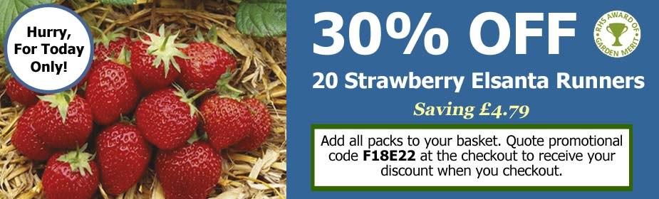 Black Friday Event Offer - 30% OFF Strawberry Plant Elsanta