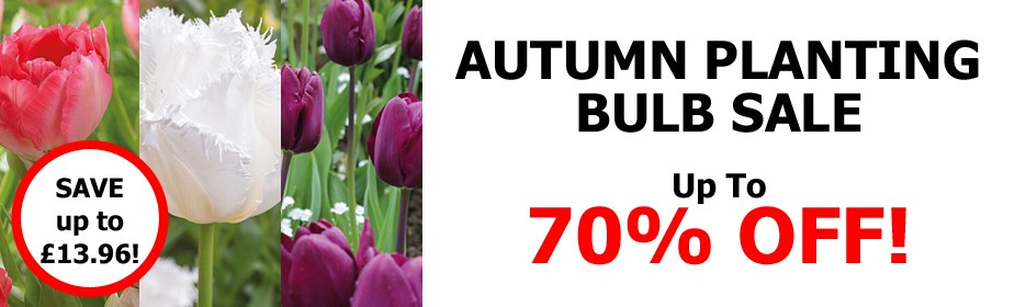 Up to 70% OFF Autumn Planting Bulb SALE!