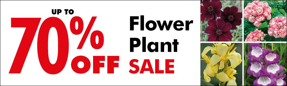 Up to 70% OFF Flower Plant SALE