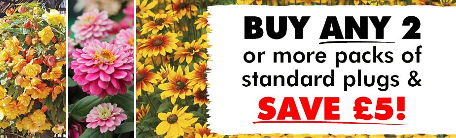 Buy ANY 2 or more packs of Standard Plug Plants & SAVE £5!