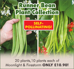 Runner Bean Plant Collection
