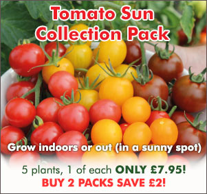 Tomato Sun Collection