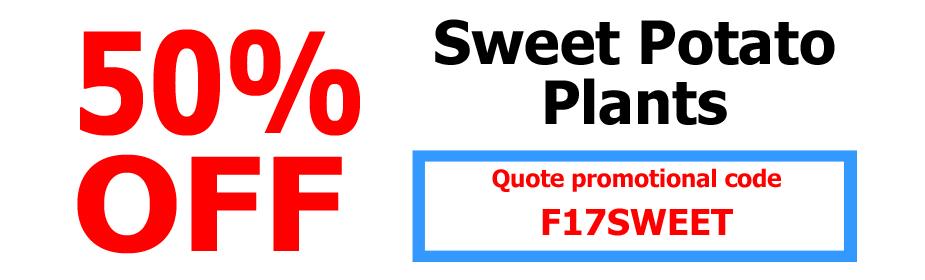 50% OFF Sweet Potato Plants
