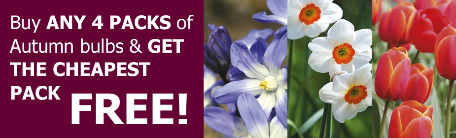 Buy any 4 packs of Autumn bulbs and get the cheapest pack free