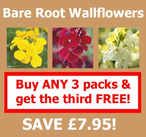 Buy ANY 3 packs of bare root wallflowers and get the third pack FREE!